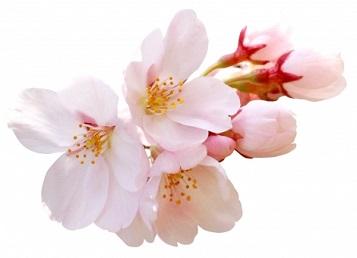 【重要】春期講習の期間延長について